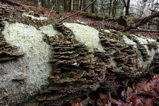 Classificazione dei gruppi ecologici fungini delterreno