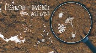 Influenza della microflora sull'assimilabilita' deimicroelementi