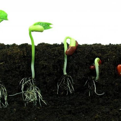 Che cosa rappresenta la germinabilità di unseme?