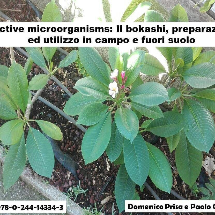 Article: Effective Microorganisms: Il bokashi, preparazione ed utilizzo in campo e fuorisuolo