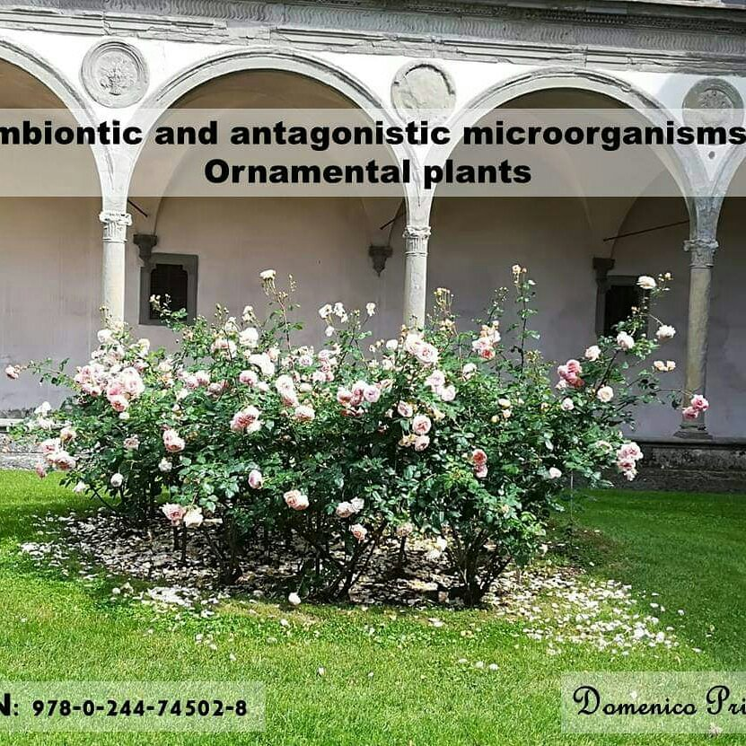 Book: Symbiotic and antagonistic microorganisms in ornamental plants – Domenico Prisa