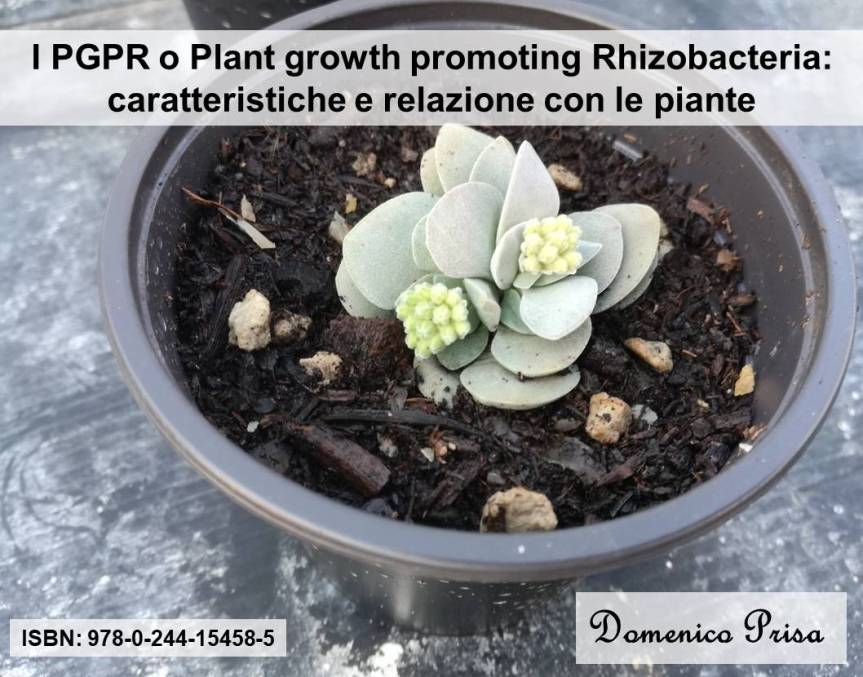 Article: I PGPR o plant growth promoting rhizobacteria
