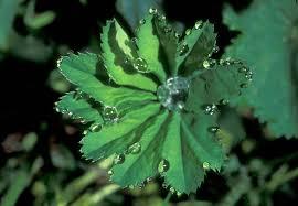 Evapotraspirazione delle piante