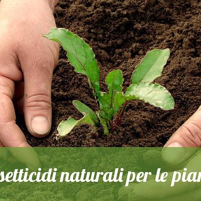 I bioinsetticidi