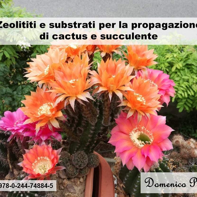 Book: Zeolititi e substrati per la propagazione di cactus esucculente