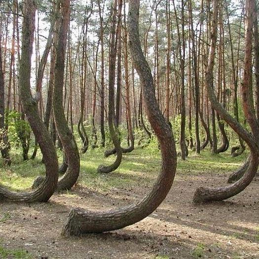 Le radici laterali