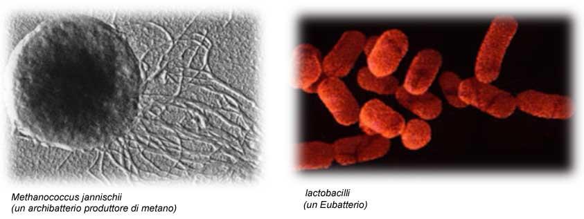 La chemiotassi deibatteri