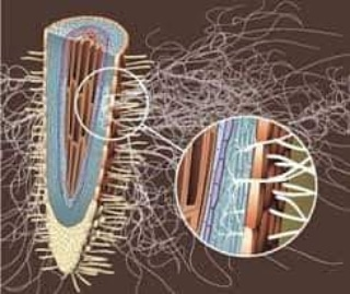 Le micorrize