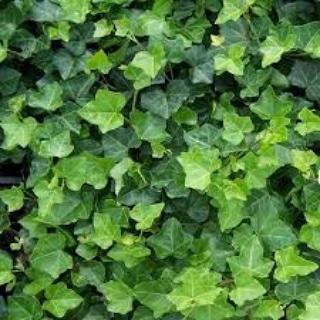 Le piante importanti per leapi