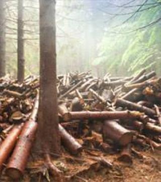 Cosa può comportare il taglio degli alberi e la deforestazione ingenerale?