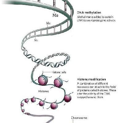 La biometilazione