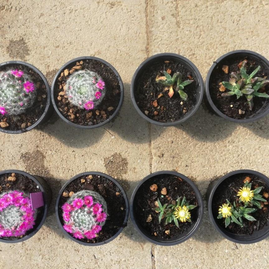 Con i Microrganismi le piante fioriscono dipiù