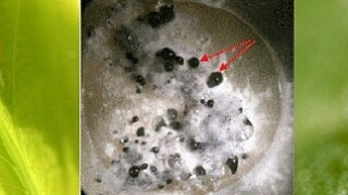 I Microrganismi in agricolturabiologica