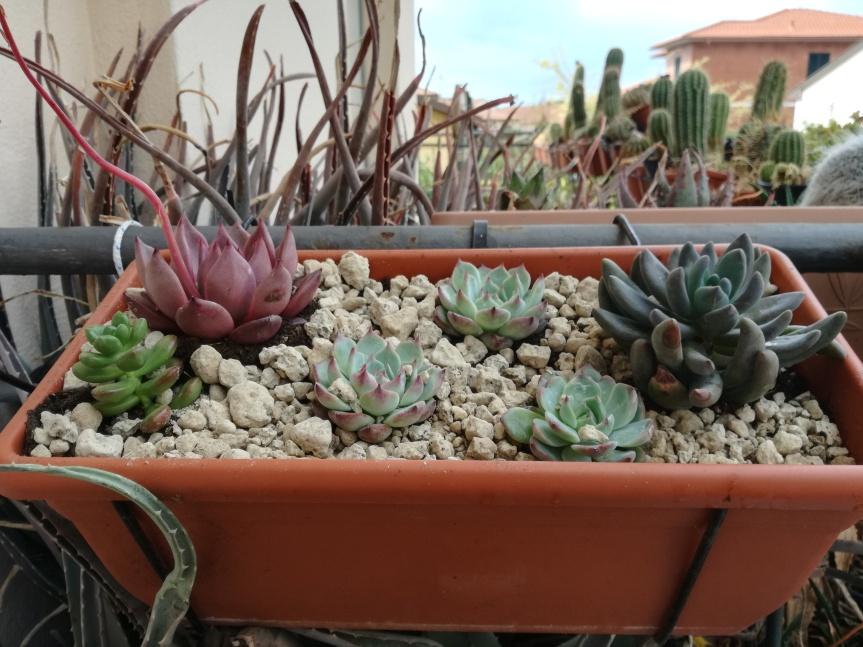 Comporre con le succulente e icactus