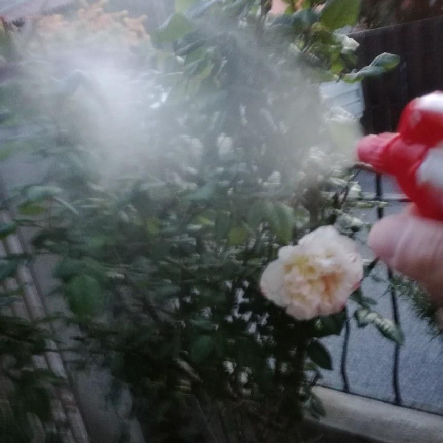 La difesa delle piante senzafitochimici