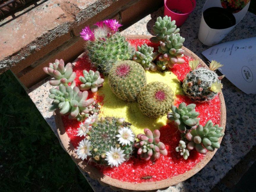 Arte succulenta