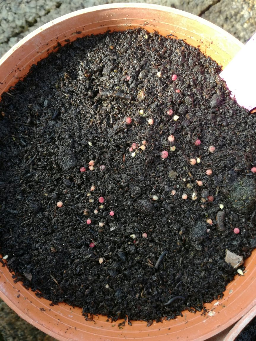 Uso delle micorrize per la germinazione deicactus