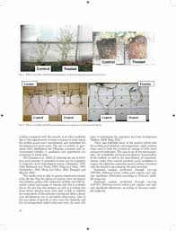ITALIAN CHABAZITIC-ZEOLITITE AND EFFECTIVE MICROORGANISM SFOR THE QUALITATIVE IMPROVEMENT OF OLIVETREES