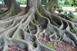 Le radici e le lorofunzioni