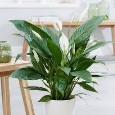 Le piante per depurare gliambienti