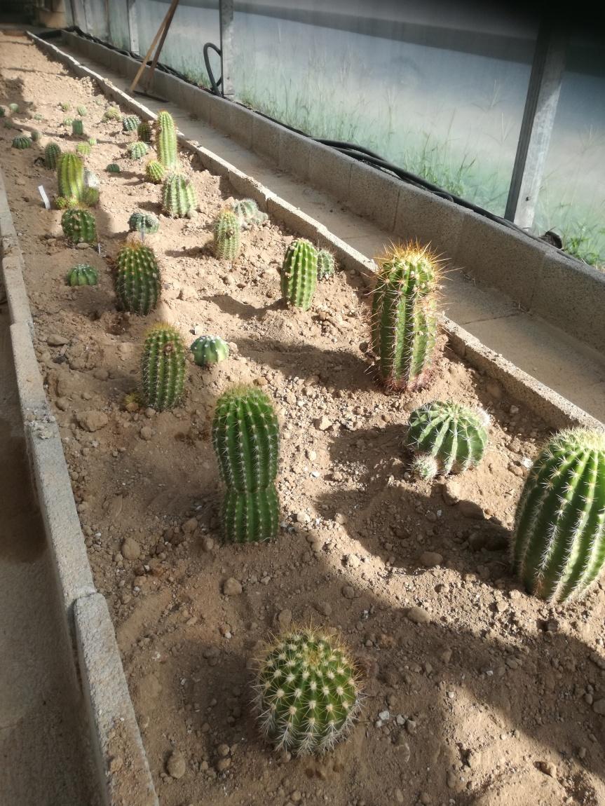 Orto botanico CACTUS