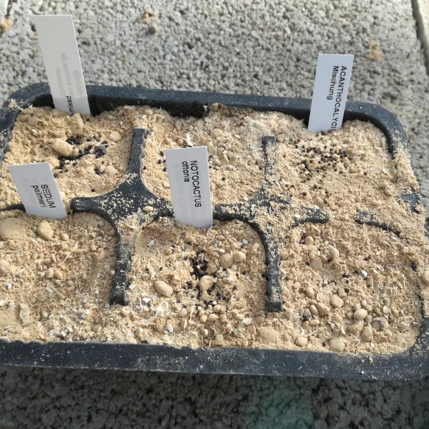 Valutazione di substrati torba free per la germinazione di: acanthocalycium, gasteria, cephalophyllum, sedum, notocactus, lobivia,glottiphyllum.