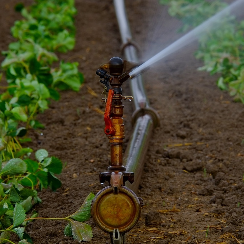 Quale acqua usare per l'irrigazione?