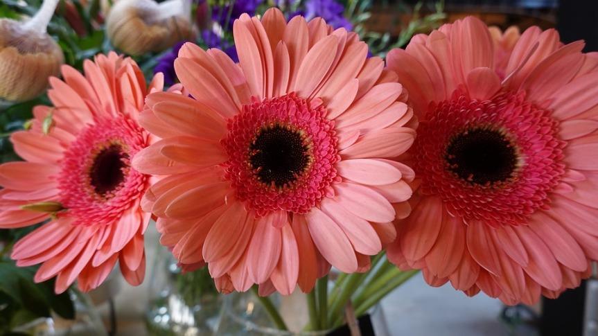 Come trattare i fiorirecisi?