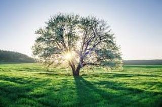 L'utilità e il valore del verde come benecomune