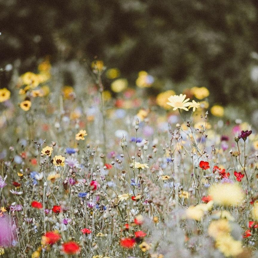 Le wildflowers cosa sono e a cosaservono