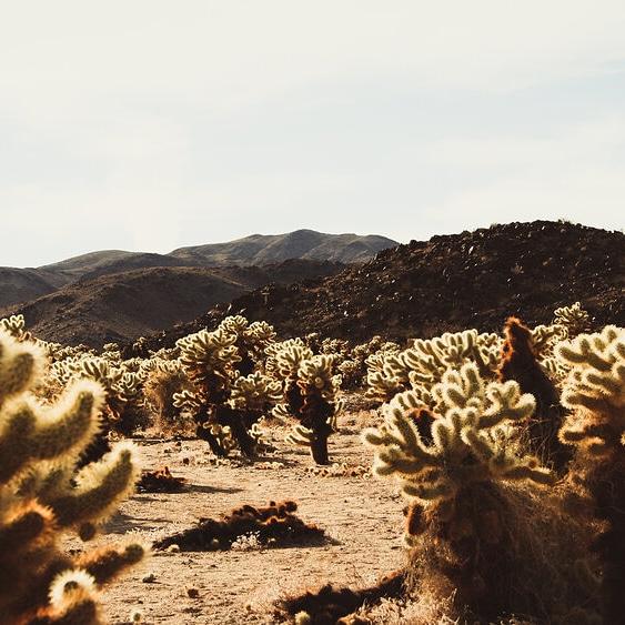 Funzionalità della radice negli ambientiestremi