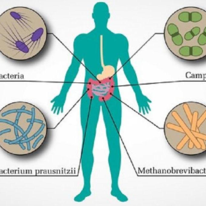 Perché è utile conoscere il microbiota normale dell'uomo?