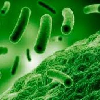I probiotici dell'uomo e deglianimali