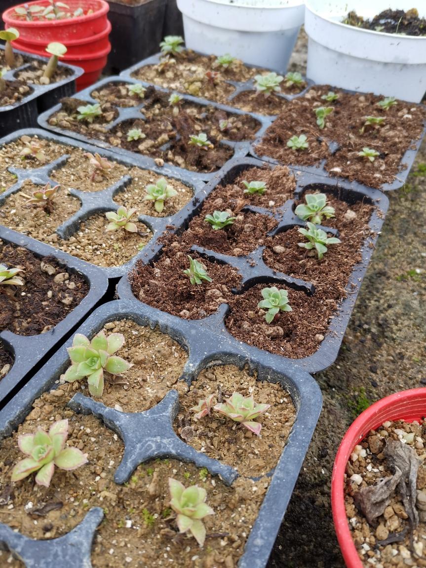 Le radici nelle piante che vivono in ambientiestremi