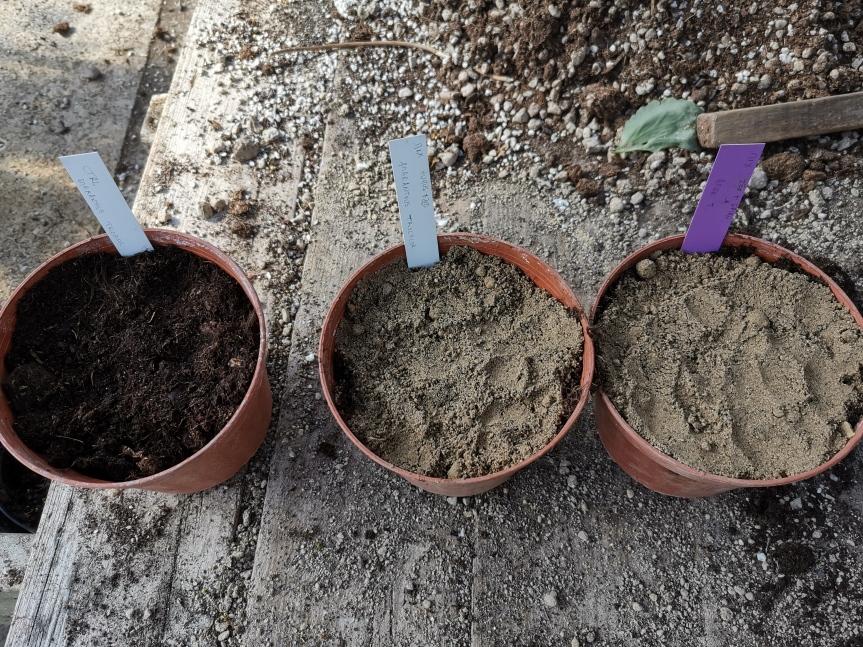 Biocontrollo e biostimolazione con miscele di humus, zeolitite, spirulina e canapa suAmaranthus