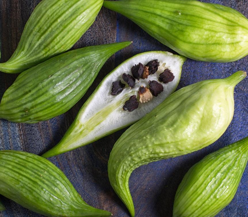 Piante alimentari insolite: Cyclanthera pedata(Achoca)