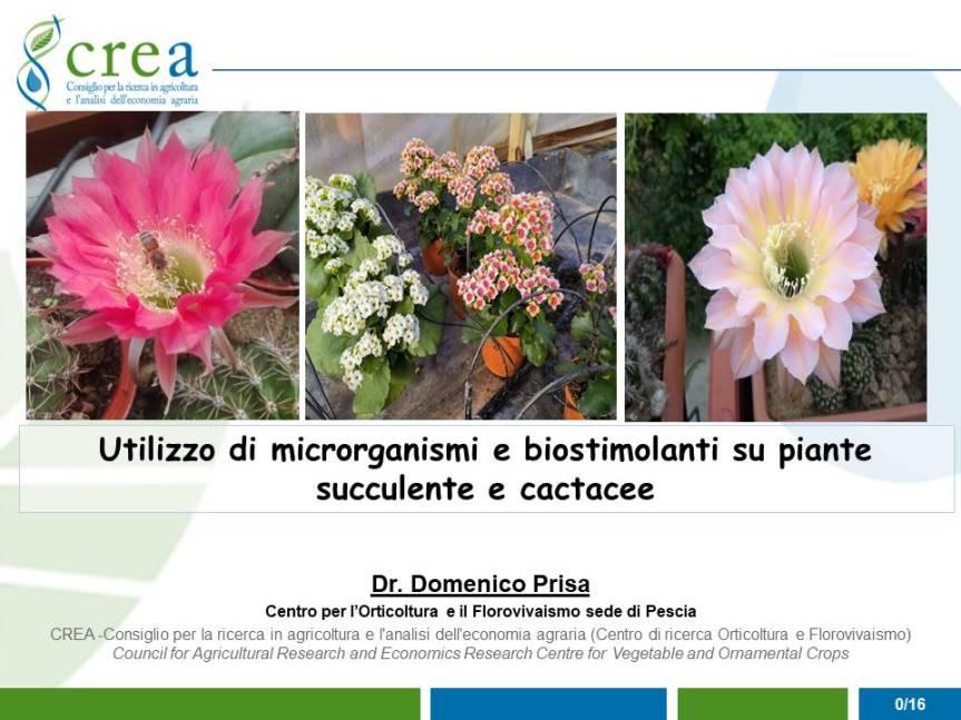 Effetto dell'uso di microrganismi e biostimolanti su piante succulente ecactacee