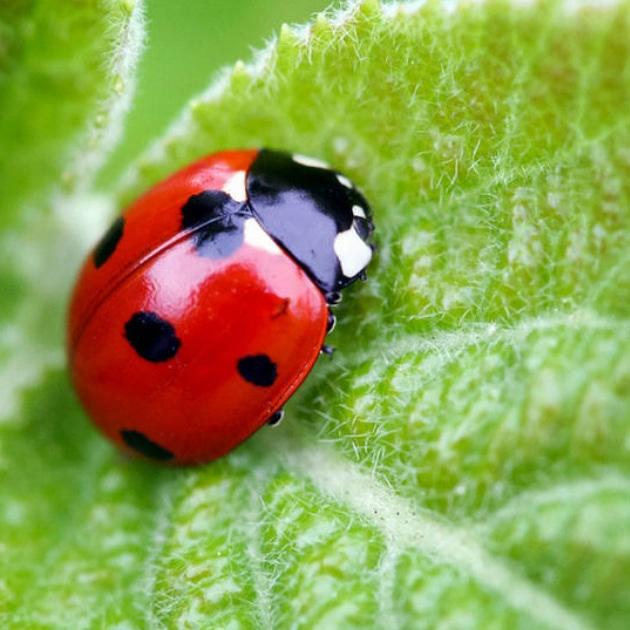 Cosa sono gli insetti ausiliari e perché sono utiliall'uomo?