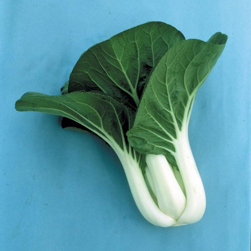 Piante alimentari insolite: Brassica rapa var. Chinensis (Cavolocinese)