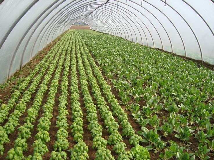 Convenzioni di ricerca per l'uso e la sperimentazione di prodotti in agricoltura (ortoflorovivaismo)