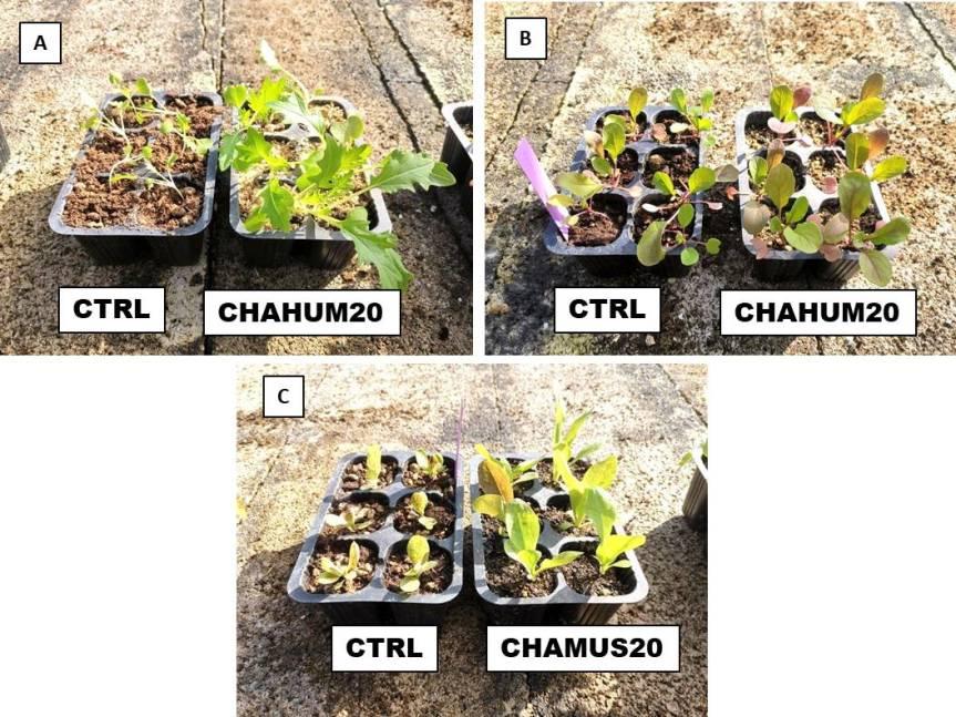 Zeolitite a chabasite addizionata di humus di lombrico per la coltivazione di specieorticole