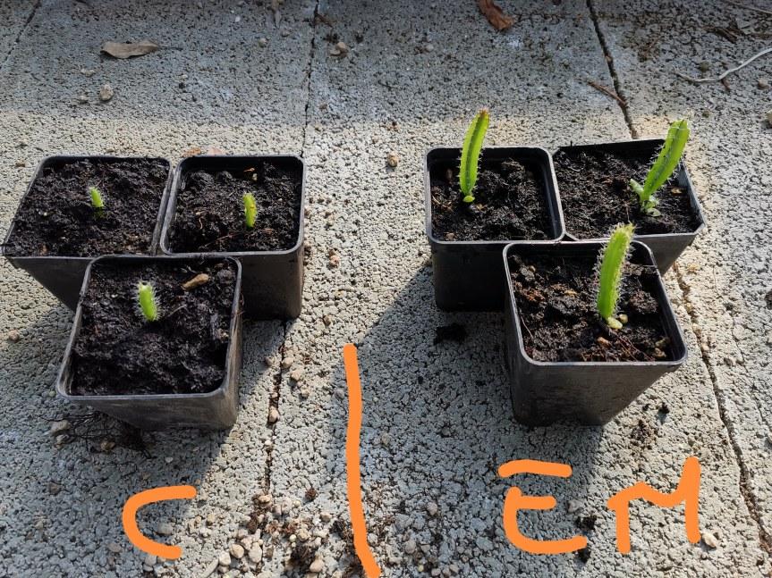 Effective microorganisms (Em) nella coltivazione di Hylocereus undatus (pitaya) cv extra dulce eAeonium