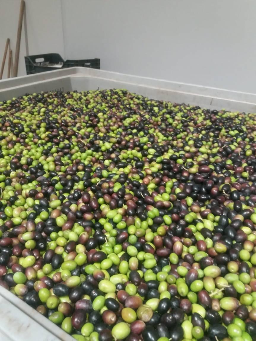 Olivo e olio micronaturaleproduzione