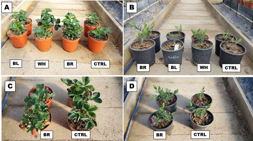 Article: Zeolites Encapsulated with Organic Matrices in Vegetable and Ornamental PlantsFertilization